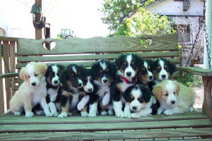 brown-nee518pups_01.jpg